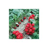 Мелито F1 семена редиса 22-25 дн. (Hazera) 25000шт