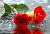 Светящиеся картины Startonight Розы Печать на Холсте Цветы Флористика Декор стен Дизайн дома Интерьер