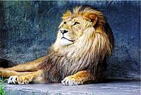 Светящиеся картины Startonight Лев Печать на Холсте Животные Декор стен Дизайн дома Интерьер