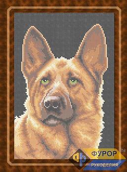 Схема для вишивки бісером картини Собака німецька вівчарка (ЖБп4-006)