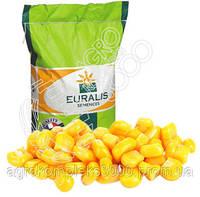 Семена кукурузы Euralis ЕС Пароли (ФАО 260)