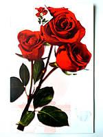 Подарочный пакет  Большой Вертикальный 25х39х9см Три красные розы