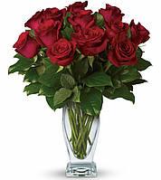 Букет долгосвежих роз Багровый Гранат, подарок девушки