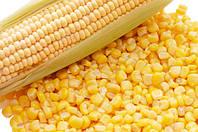 Советы по выбору семян сладкой кукурузы