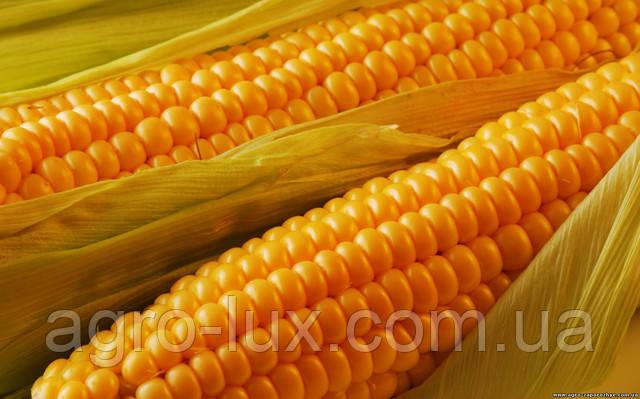 Семена кукурузы для высокого урожая