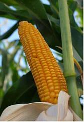 Семена кукурузы Mas 10.А