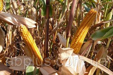 Семена кукурузы Mas 15.Т