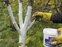 Весенняя обрезка деревьев и кустарников