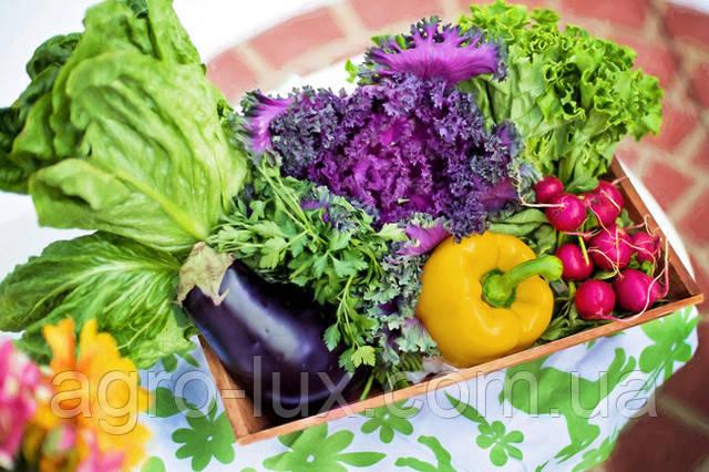 Продажа семян овощей