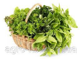Семена зелени высадка