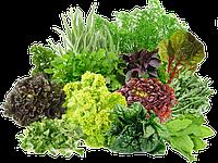 Посев семян зелени: главные нюансы