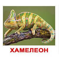 """Карточки Домана на русском """"Экзотические животные"""""""