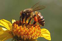 Продукты пчёловодства