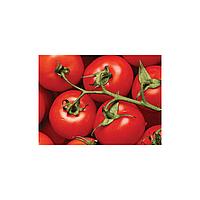 Дар Заволжжя насіння томату дет (Елітний ряд) 50 шт.