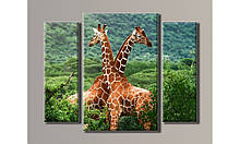 "Модульная картина на холсте ""Жирафы 1"""