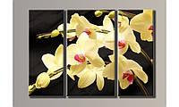 """Модульная картина на холсте """"Желтая орхидея 2"""""""