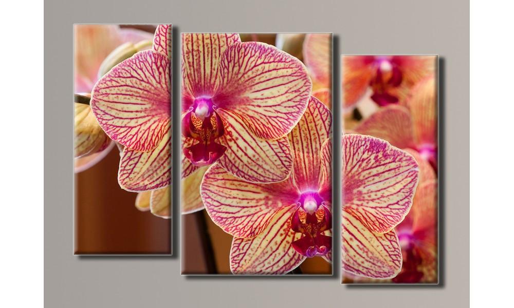 """Модульная картина на холсте """"Розовые орхидеи"""""""