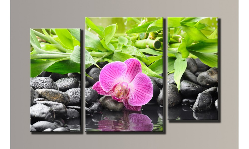 "Модульная картина на холсте ""Орхидея на камнях"""