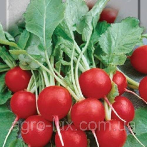 Семена популярных сортов сладкого редиса