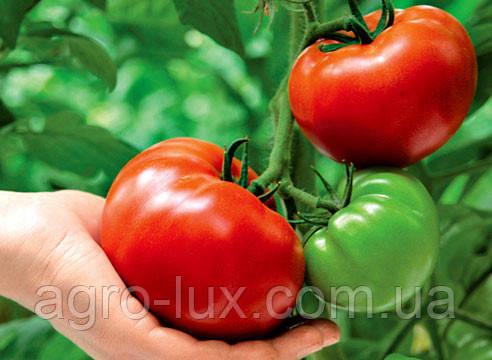 Семена томатов для рассады
