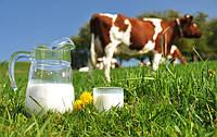 Закупочные цены на молоко: эксперт дал неутешительный прогноз