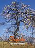 """""""Дерево как образ человека"""" (Мухаматулина Е., Кац Г.) - Метафорические ассоциативные карты"""