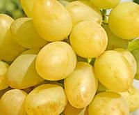 Саженцы винограда раннего срока созревания сорта Аркадия