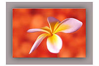 Светящиеся картины Startonight Жасмин Печать на Холсте Цветы Флористика Декор стен Дизайн дома Интерьер