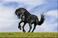 Светящиеся картины Startonight Черная Лошадь Печать на Холсте Животные Декор стен Дизайн дома Интерьер, фото 1