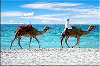 Светящиеся картины Startonight Пляж Печать Море Верблюд Песок на Холсте Декор стен Дизайн дома Интерьер