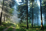 Светящиеся картины Startonight Дорога в Лесу Природа Пейзаж Печать на Холсте Декор стен Дизайн дома Интерьер