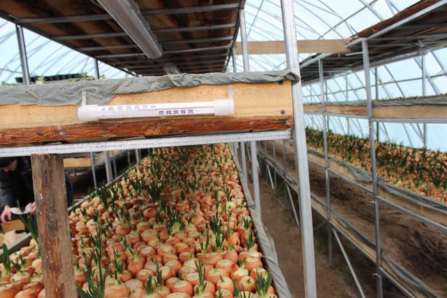 """выращивание в теплицах """"Фермер-8"""""""