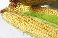 Семена кукурузы Пионер P 9911 (П9911)