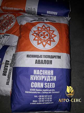 Насіння кукурудзи Солонянський 298 СВ, фото 2
