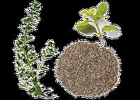 Професійні насіння салату, зелені, пряних трав.
