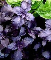 Семена базилика Ереванский фиолетовый (Узбекистан), 1 гр