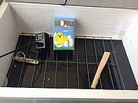 Автоматический инкубатор ципа-харьков, закладка 40 яиц, цифровой регулятор, автоматический переворот, пластик, фото 1