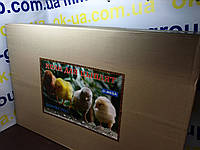 Брудер ясли для цыплят курочка ряба o-mega