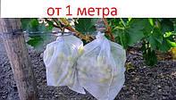 Белое агроволокно (спанбонд) 19 г/м кв. как укрывной материал для растений