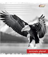 Тетрадь 96 листов клетка ,Мир животных, белоснежная бумага Голд Бриск