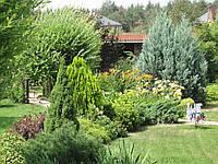 Озеленение территории