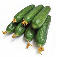 МЕВА F1 - семена огурца партенокарпического, 100 семян, Rijk Zwaan, фото 1
