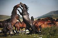 «Силу лошади» попросили попридержать коней