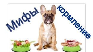 Мифы и реальность о кормлении собак