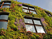 """Вертикальное озеленение фасада """"под ключ""""."""
