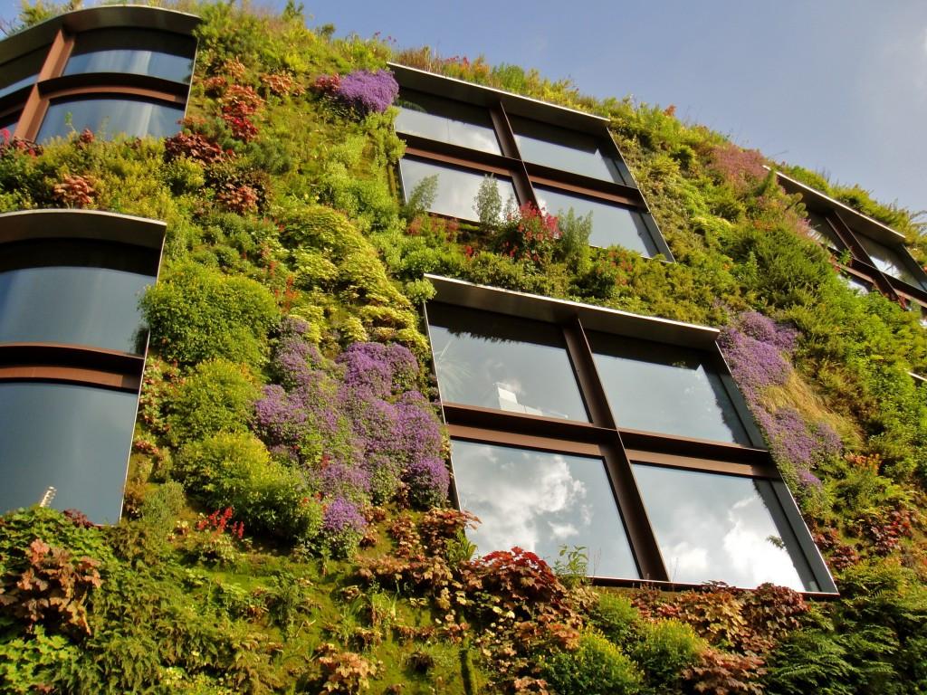 Картинки по запросу Вертикальное озеленение фасада