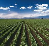 Насосы для сельского хозяйства и загрязненных жидкостей