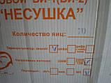 Инкубатор бытовой автоматический Несушка БИ-1 70 яиц (220В/12В), фото 3