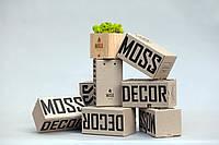 Брендированные ЭКО-сувениры Moss cube (светлое дерево)