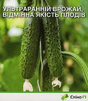 Ультраранний урожай, отличное качество плодов. Огурец Спино F1.